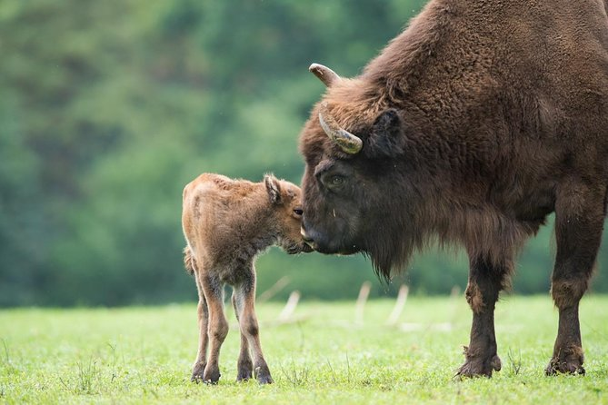 Bialowieza National Park Tour from Warsaw by Private Car with Lunch included
