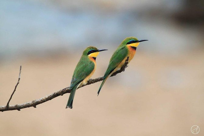 7 Days Tanzania Bird Watching Safari photo 3