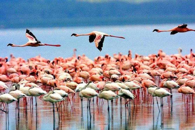 7 Days Tanzania Bird Watching Safari photo 8
