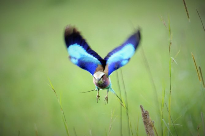 7 Days Tanzania Bird Watching Safari photo 11