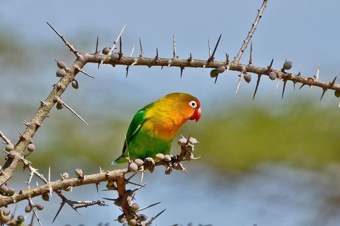 7 Days Tanzania Bird Watching Safari photo 7