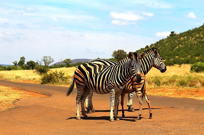 Pillanesburg National Park Safari with Lesedi Cultural Village Day Tour