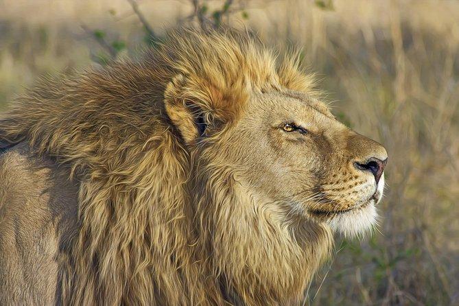 Nairobi national park morning Safari 6.a.m to 11a.m
