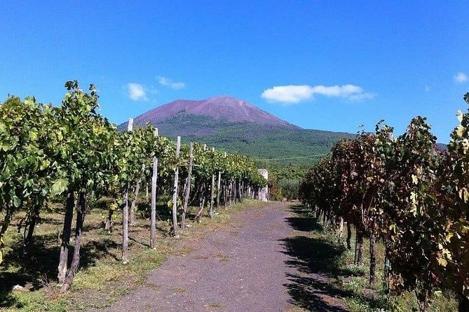 Vesuvius with Wine Tasting from Naples