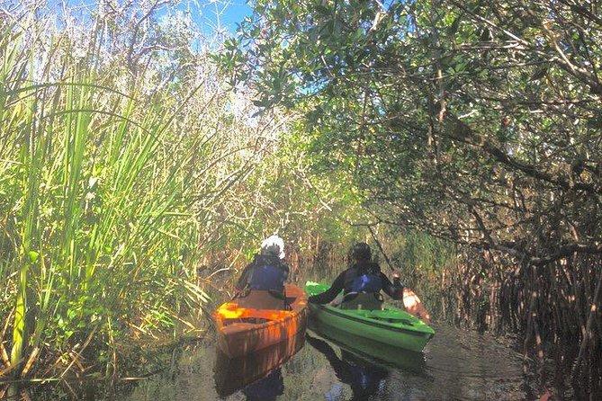 Everglades Sunset Safari thru the Mangrove Tunnels