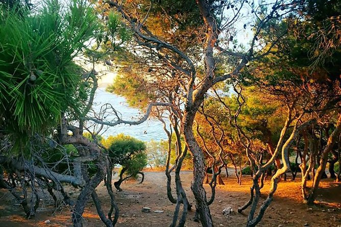 See Barcelona Above - Beautiful Hike with Spectacular Views