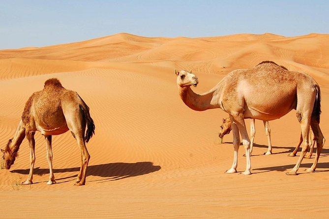 Quad Bike Dubai Red Dune Morning Desert Safari with Camel Ride