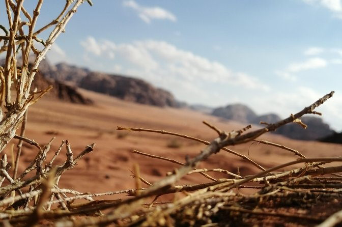 Wadi Rum Private tour from Amman (1 Day) photo 20