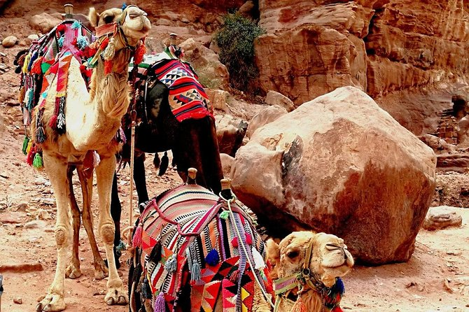 Wadi Rum Private tour from Amman (1 Day) photo 40