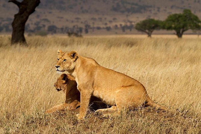 5 Days Memorable Tanzania safaris