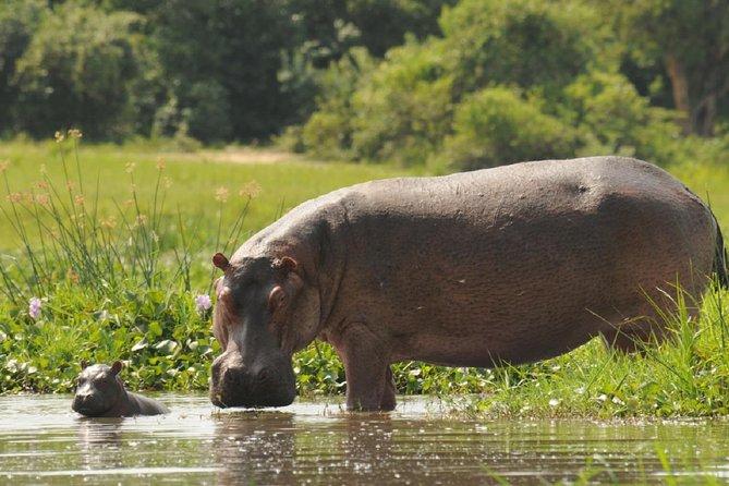 Uganda: 10-Day mid-range Wildlife, Big-Five, Gorilla Safari