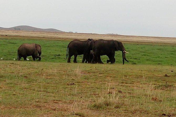7 days maasai mara - Lake Nakuru - Lake Naivasha - Amboseli safari