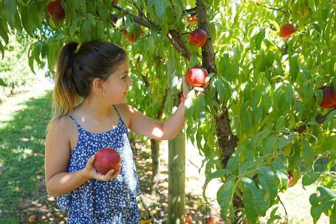 Summer Fruits Festival