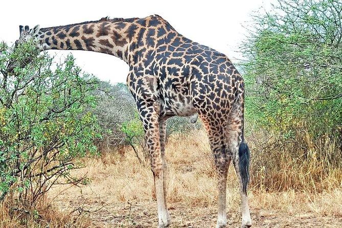 5 Days Tanzania Safari-Lake Manyara,Serengeti,Ngorongoro.