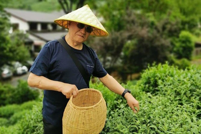 Hangzhou Longjing Tea Plantation Culture Experience Tour