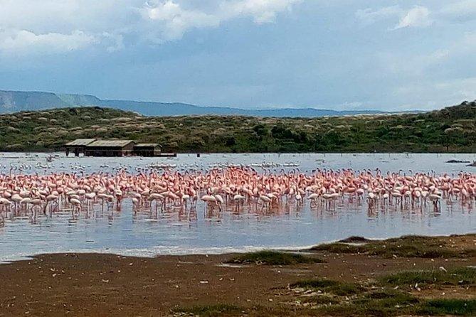 Day excursion lake Nakuru National Park.
