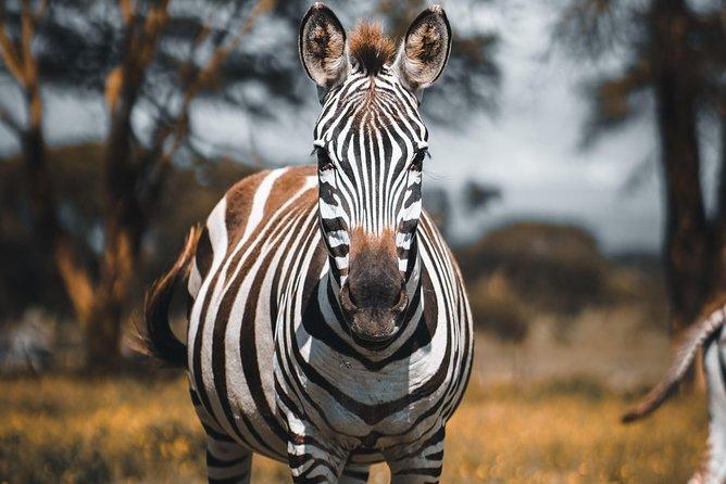 4 Days Tanzania Safari Serengeti -Ngorongoro-Tarangire With Burigi Chato Safaris