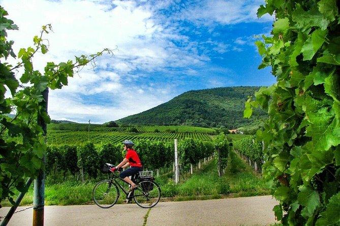 E-Bike Mainz Wine Tour / Wine Tasting