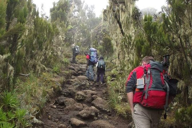 Mount Kilimanjaro Hiking Via Marangu Route. photo 23