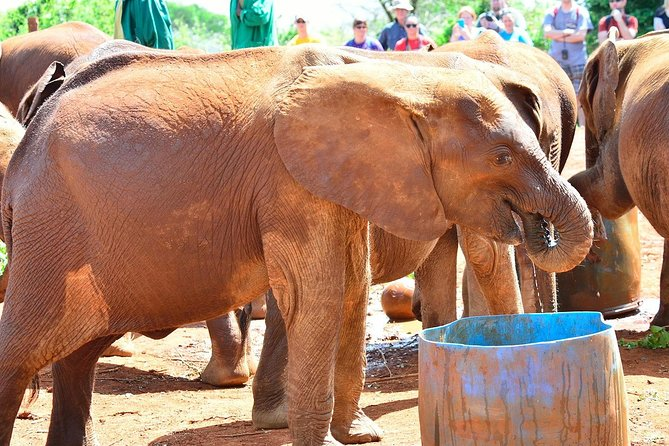 Nairobi Guided Day Tour to Giraffe Center & Elephant Orphanage
