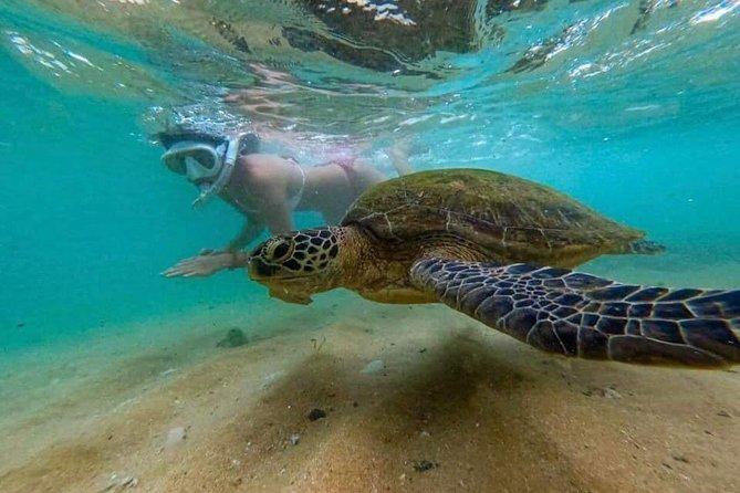 Snorkling and Sea Turtles Hikkaduwa