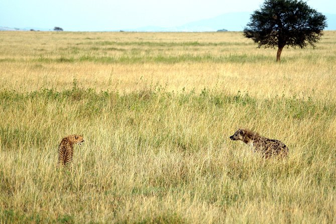 5 Days Safari Arusha, Tarangire, Serengeti & Ngorongoro photo 3