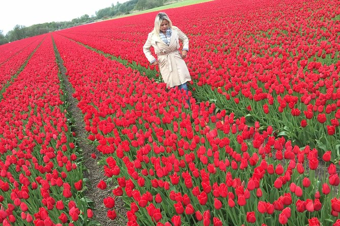 Into the flowerfields photoshoot & Windmill Cruise Private Tour + Private Guide