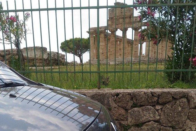 Paestum Temples+Bufala Mozzarella Farm+Wine tasting in Cilento (from Positano)