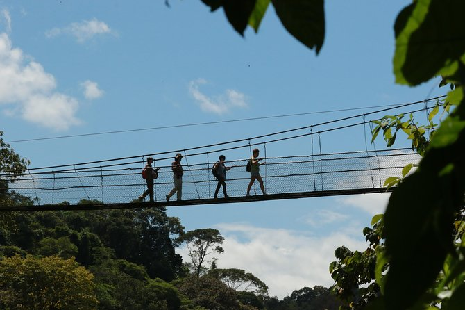Natural History Walk in Tirimbina, Sarapiquí