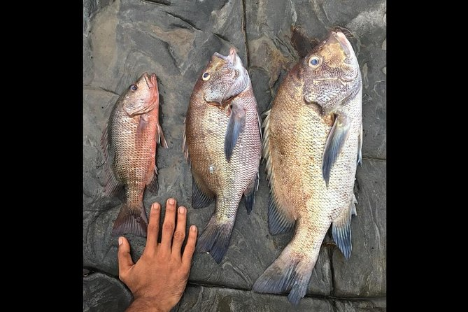Learn Fishing In Anjuna