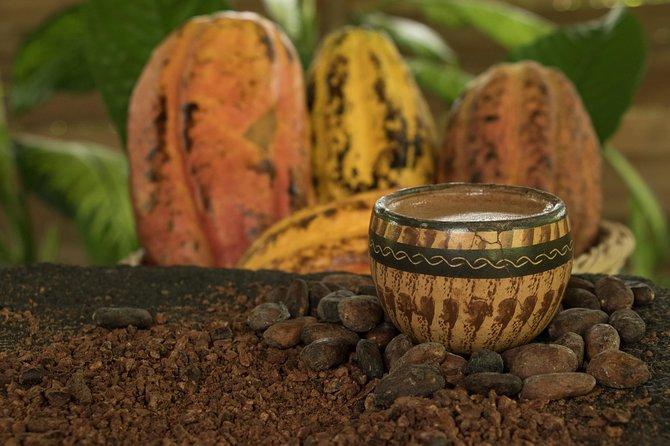 Chocolate at the Rainforest of Tirimbina Tour