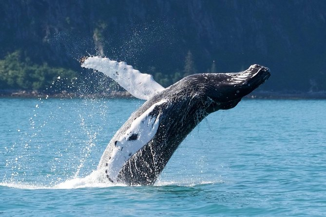 Kenai Fjords and Resurrection Bay Half-Day Wildlife Cruise