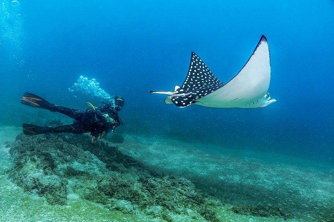 Learn to Dive - Puerto Vallarta Beginners Scuba Course