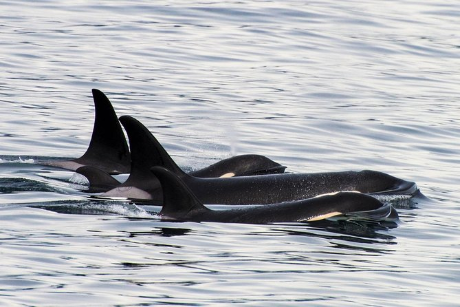Orca Quest Cruise
