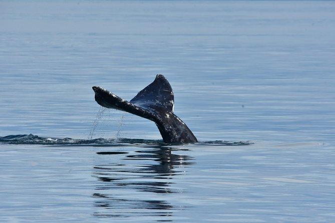 Everett 3 Hour Gray Whale Tour