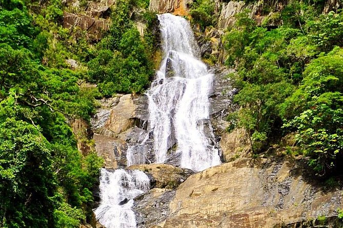 Private Half Day Tour: Exclusive World Heritage Rainforest and Waterfall Tour from Cairns