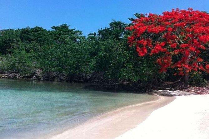 Half Moon Private Beach y Calico Jack's Private Island Excursion