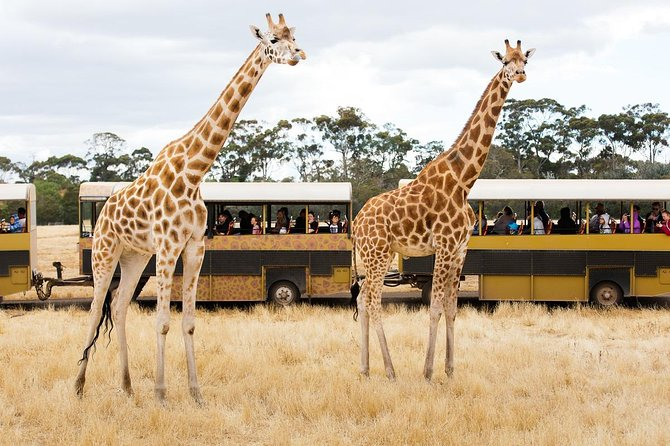 Werribee Open Range Zoo General Admission Ticket