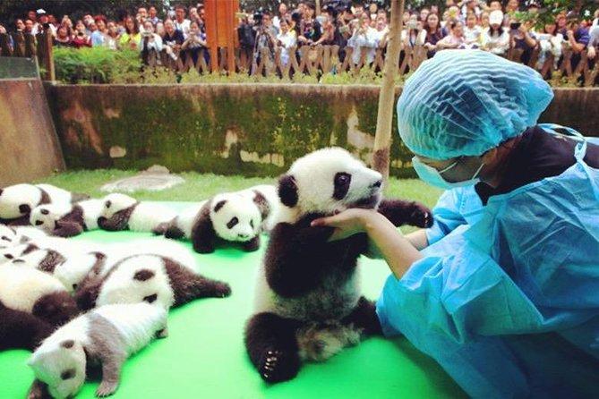 Private Half-Day Tour Chengdu Panda Breeding Center