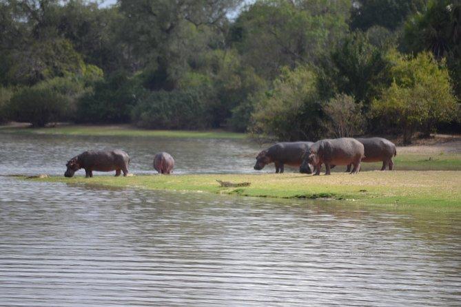 3 Days Selous Game Reserve Road Trip- Boat Safari, Game Drive And Walking Safari