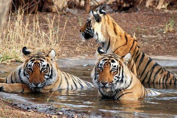 Ranthambhore 2 day tour package with Jangal Safari