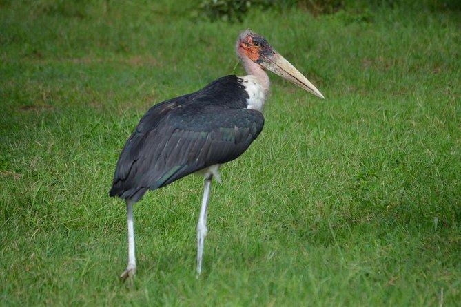 Ruaha National Park From Dar Es Salaam Flying Option 3 Days 2 Nights