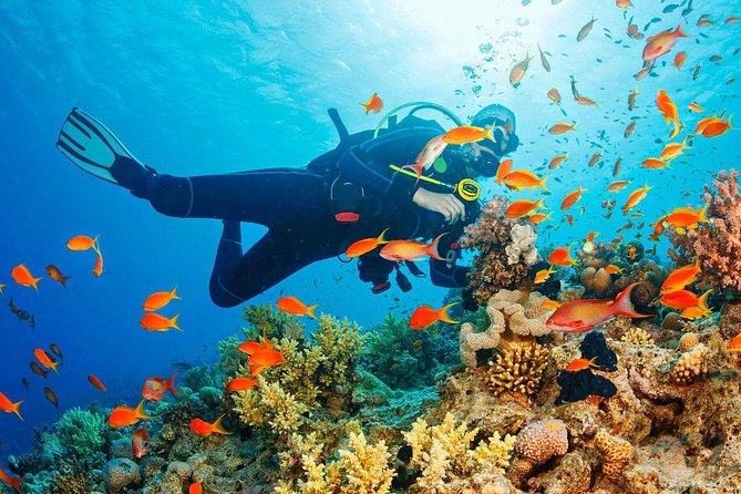 Your first diving experience in Spain, Costa del Sol, Costa Tropical