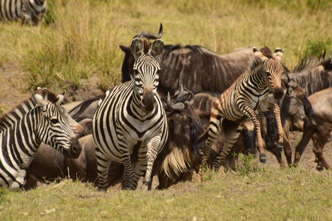 5 Days Kenya Safari – Ol Pejeta, Lake Naivasha & Masai Mara