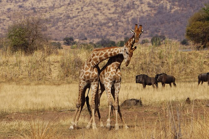 5 Days Tanzania Safari - Serengeti - Lake Manyara -Tarangire and Ngorongoro