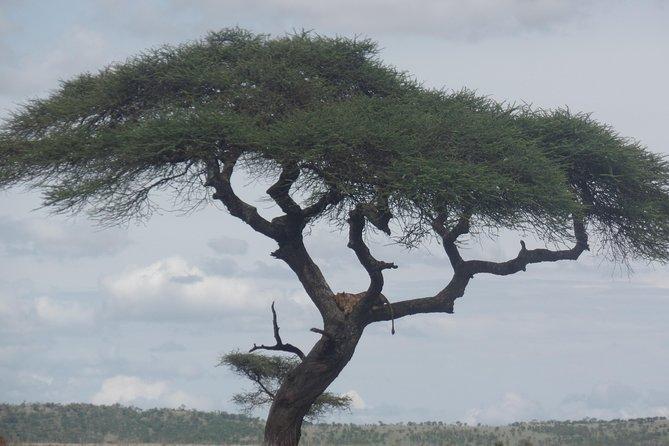 Mara Explorer safari