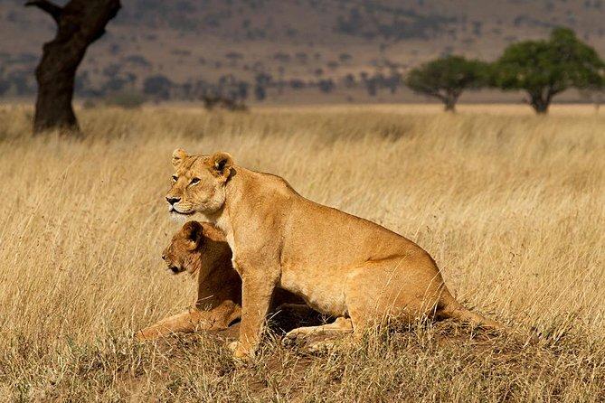 4 days Highlights Budget Camping Safari Tanzania