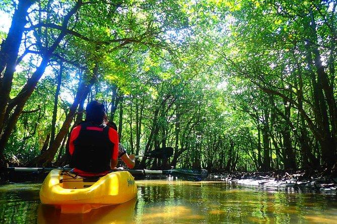[Okinawa Iriomote] SUP/Canoe Tour at Mangrove Forest