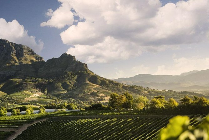 Taste the Cape Winelands - Wine Pairing & Wine Tram Small Group Day Tour