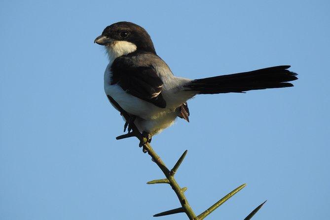 Lake Naivasha Birds Photography